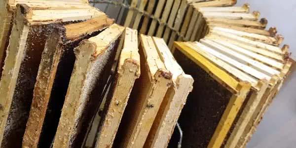 Durch die Zentrifugalkraft löst sich schließlich der Honig von den Waben.