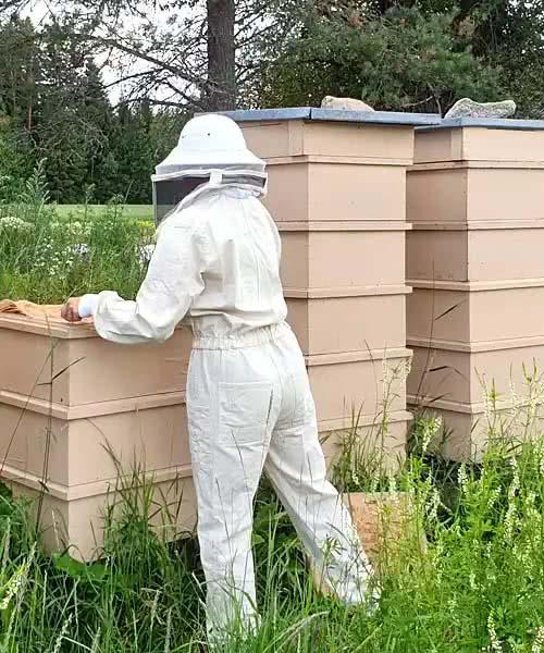 Wir stellen im Sommer über 300 Bienenstöcke in verschiedenen Teilen Finnlands auf.