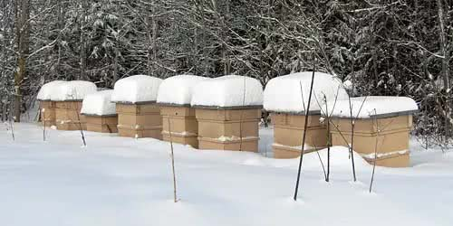 Bees are sensitive for distraction when they are in their winter cluster mode.