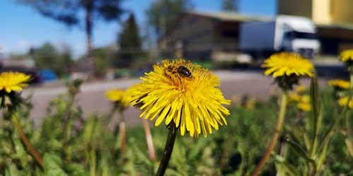 Tule markkinoille moikkaamaan meitä - kesän kukkaloisto tarjoaa nyt parastaan!
