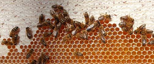 Honig ist lecker und ökologisch nachhaltig