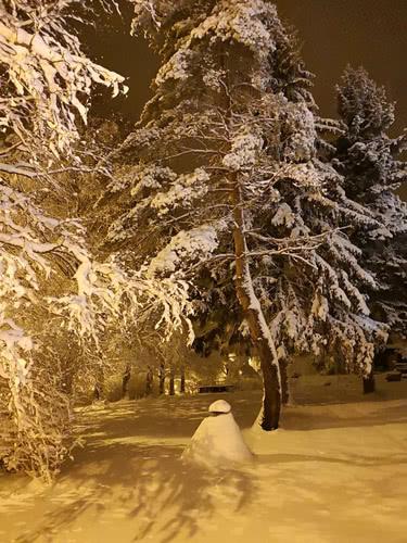 talvinen luonto
