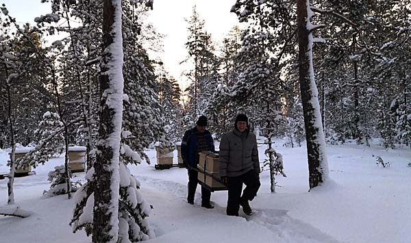 Moving beehives in freezing temperatures